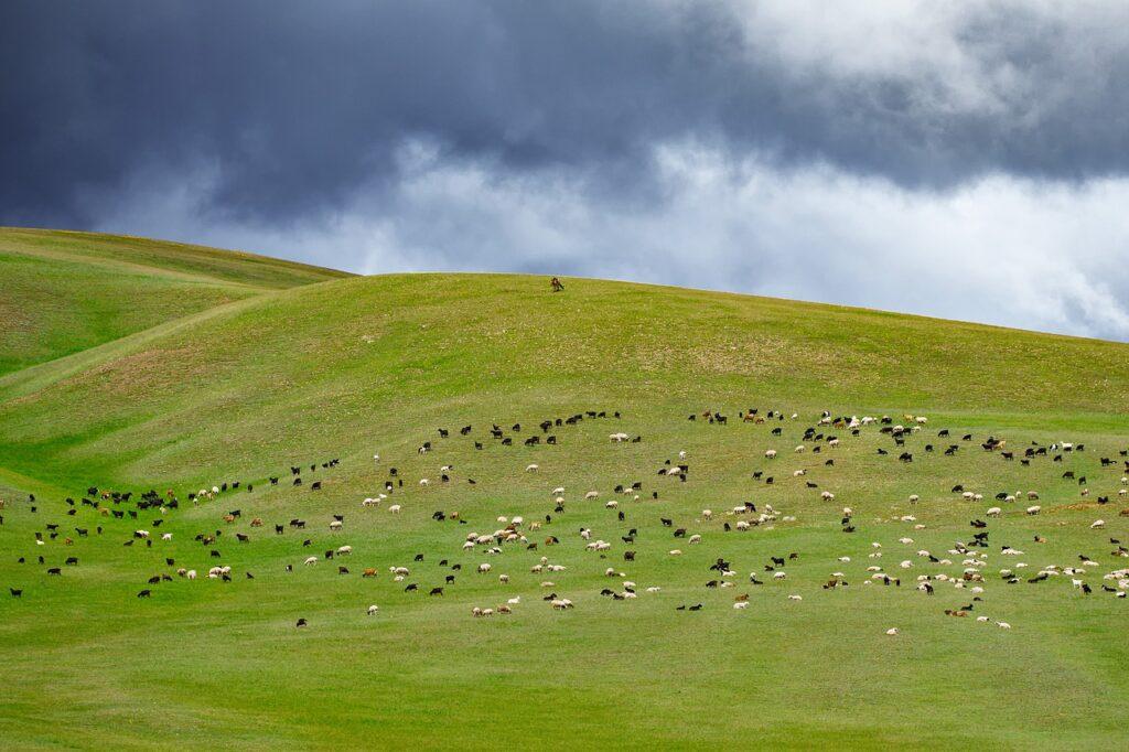 mongolie quand partir