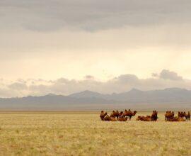 quand partir mongolie